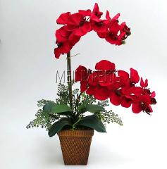 Hot Sale!bonsai flower orchid bonsai, beautiful phalaenopsis orchid home garden plant orchid pot quality flower plants,100flores