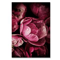 Flowers Plants Wall Art Canvas Painting Pony Posters Nordic Poster Classical Rose Wall Pictures For Living Room Picture Unframed