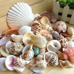 HiMISS Natural Mixed Sea Shells for Aquarium Microlandschaft Decor Props