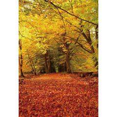 Autumn Season Forest Path Leaves Scenic Backdrop Studio Background Photos Props