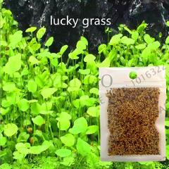 Big Sale!Aquarium Landscape Ornament Aquatic Water Grass Mini Leaf Live Plant Fish Tank Decoration Home Garden ,#N73E45